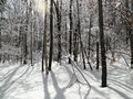 Snowy forest sunny day in winter Stock Photo