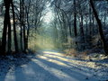 Snowy forest at sunset Royalty Free Stock Photography