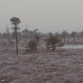 Snowy landscape in frosty winter bog aged photo country side effect vintage retro Royalty Free Stock Images