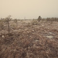 Snowy landscape in frosty winter bog aged photo country side effect vintage retro Royalty Free Stock Photo