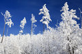 Snowy Nature In High Tatras, S...