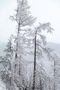 Snowy nature in High Tatras, Slovakia