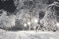 Snowy night park Stock Images