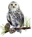 Snowy owl sitting on a branch