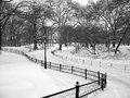 Snowy Path In Central Park, Ne...