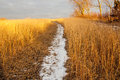 Snowy path in the meadow at sunset Royalty Free Stock Photos