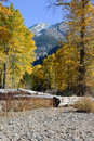 Snowy Peak and Autumn Cottonwoods Royalty Free Stock Images