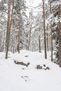 Snowy Pine Tree Forest