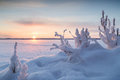 Snowy plants and sunrise in finland snowbank at a frozen lake the winter Stock Photo