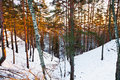 Snowy ravine in winter forest Royalty Free Stock Image