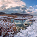 Snowy river and dry tree Royalty Free Stock Photo