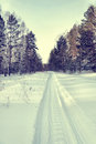 Snowy road for snowmobiles in a winter pine forest landscape Royalty Free Stock Images
