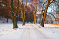 Snowy road to the forest Royalty Free Stock Photo