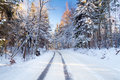 Snowy road in winter forest Royalty Free Stock Photo