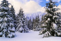 Snowy slope Royalty Free Stock Photo