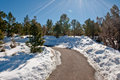 Snowy trail through forest Royalty Free Stock Photo