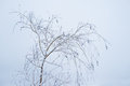 Snowy tree branches thin and trunks against the sky in winter Stock Images