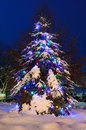 Snowy Tree lit for Christmas Royalty Free Stock Photo