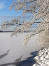 Snowy tree near frozen lake Royalty Free Stock Photo
