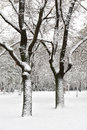 Snowy tree in park Stock Photo