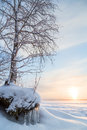 Snowy tree and sunrise in finland icicles at a frozen lake the winter Stock Image