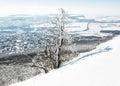 Snowy tree and winter landscape, Nitra city, Slovakia