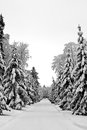 Snowy trees around desolate alley Royalty Free Stock Photography