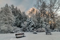 Snowy Trees and Benches Royalty Free Stock Photo