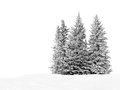 Snowy trees group of frosty spruce in snow isolated on white Royalty Free Stock Photos