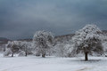 Snowy trees on a meadow with stormy sky Royalty Free Stock Photo