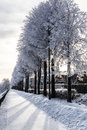 Snowy trees stand in a line on the quay of yaroslavl in winter day russia Royalty Free Stock Image