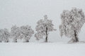 Snowy trees in winter landscape Stock Image