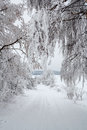 Snowy trees in winter landscape and rural road Stock Images