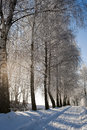 Snowy way and frosty rime on the trees snow covered path Royalty Free Stock Photography