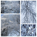 Snowy white background winter collage of tree branches Royalty Free Stock Photo