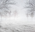 Snowy winter background nature with trees Royalty Free Stock Photos