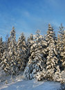 Snowy winter forest trees Royalty Free Stock Photo