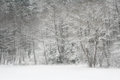 Snowy winter landscape scene Royalty Free Stock Image