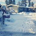 Snowy winter scene with deer tracks through snow. Royalty Free Stock Photo