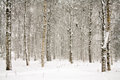 Snowy wintry forest Royalty Free Stock Photo