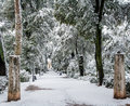 Snowy wooded lane with ruins a walkway in a park in fresh snow ancient ruin in the bckground Royalty Free Stock Photography