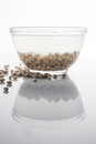 Soaked and scattered beans on white with reflection in a glass bowl Stock Images