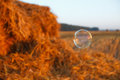 Soap bubble floating in the air. Flying   on the grass field background. Royalty Free Stock Photo