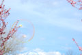 Soap bubbles balloons on spring background with blossom trees Stock Images