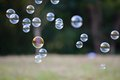 Soap bubbles in front of the forest Royalty Free Stock Photo