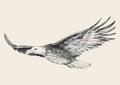 Soaring eagle sketch illustration of a Stock Photo