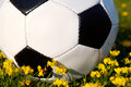 Soccer ball Stock Image
