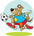 Soccer Dog Royalty Free Stock Images