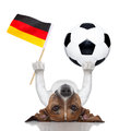 Soccer dog balancing a ball and a german flag Royalty Free Stock Photo