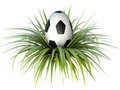 Soccer egg Stock Images